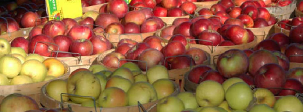 apples-1016x375