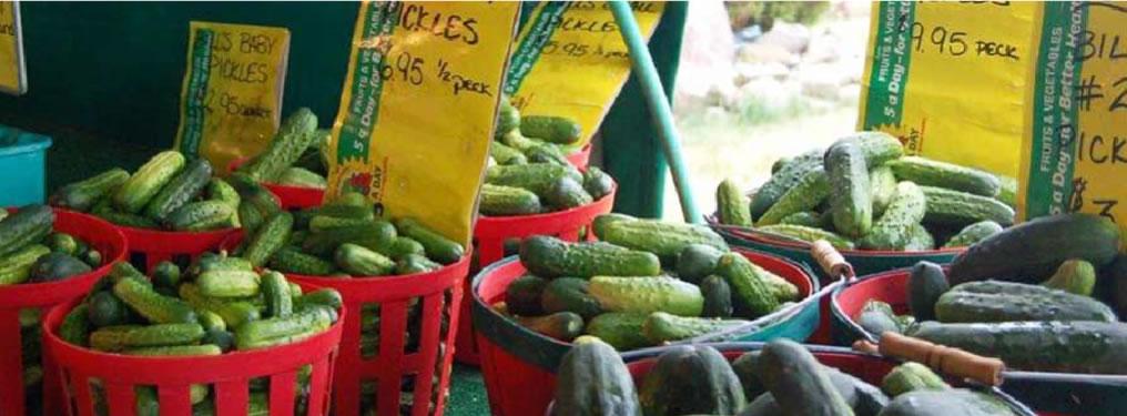 cucumbers-1016x375