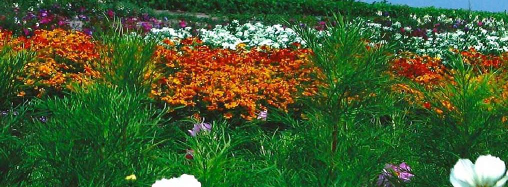 flowers-1016x375