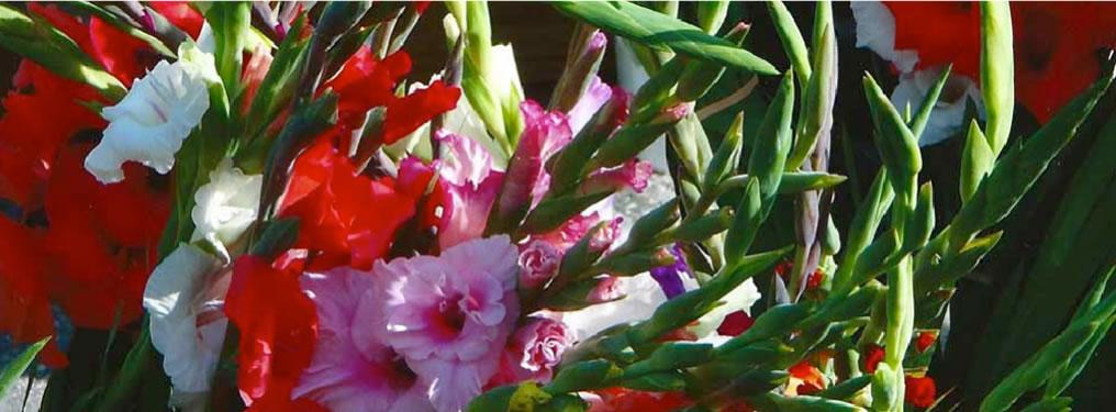 flowers2-1016x375