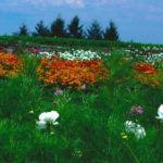 bills-flower-garden
