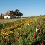 field-of-flowersweb2