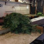 greens-in-shop_0