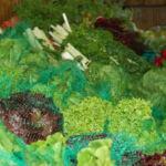 produceweb2