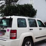 tree-on-white-jeep